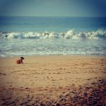 The Sea, sand and the dog by CrazyNalin