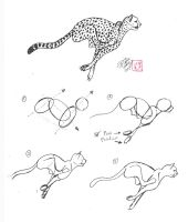 Draw a Cheetah by Diana-Huang