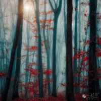 eternal flame by ildiko-neer