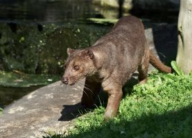 Fossa by FurLined