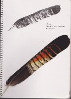 Red-Tailed Black Cocatoo Feather by Raechi-Cherie