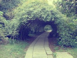 Faded tunnel of trees by Laura-in-china