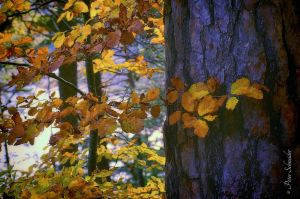 Autumn leaves. by Phototubby