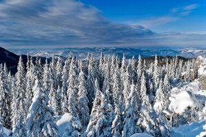 Winter in Rarau mountain by lica20