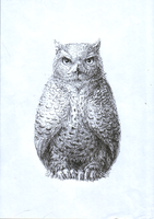 Owl. by Moonticore