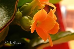 Orange Glow by Mark-Allison