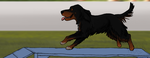 MACH Agility Title - George by KayCMatter