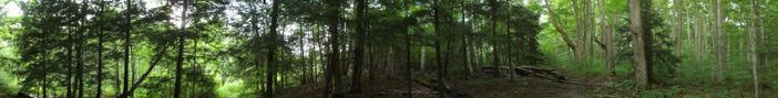 Forest Panorama by greenearth777