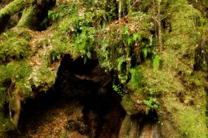 Mossy Bower 3 by rensstocknstuff