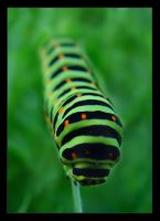 caterpillar by stachu