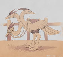 150+ project: dodrio by edface