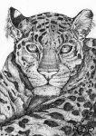 Leopard Pen Portrait by Tebyx