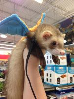 Charizard Ferret Costume by Glacdeas