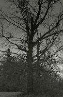 Withered... by thewolfcreek