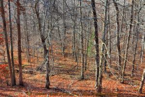 00-CarterCaveStatePark-2014-IMG-6264-HDR-WP-Master by darkmoonphoto