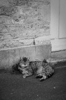 ..: May 2015 - Stray cat :.. by Mademoiselle-P