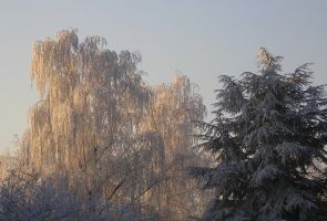 Winter in my backyard by Forgotemme