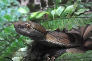 ssssnake by LucieG-Stock