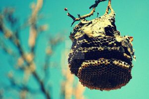 Beehive by judedoesntcare
