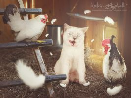 Commotion in the chicken coop by Katrin-Elizabeth