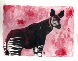 Okapi by HonestAnxiety