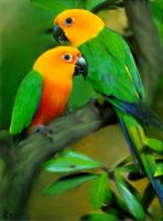 Jenday Conures by Sylpheah