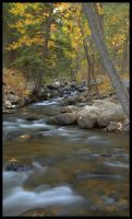 Fall in the Canyon by wyorev