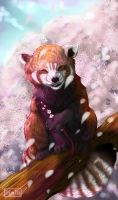 New Red Panda ID by Panda-kiddie
