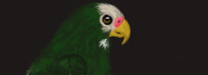 Norris the parrot by XXAngryLoneWolfXX