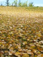 Golden Waves of ... Oh Its Just Fall by xdancingintherain