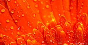 Macro flower 5 by lihualicious