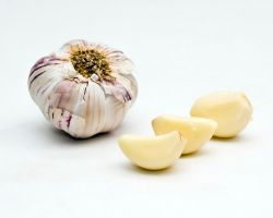 Garlic by Orzel