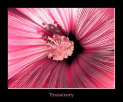 Transitory by chrusel