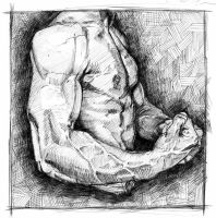 Male Anatomy Arm Torso Study by Svendsgaard
