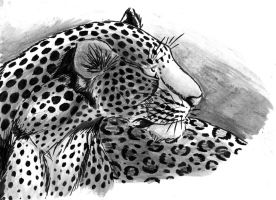 The leopard by LionessFortune