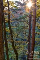 Forests Symphony by Dave-Derbis