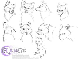 Practice wolf heads by FlyingPony