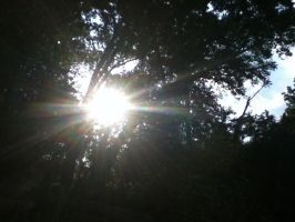 Sunbeams Through the Trees by KristinMarie7171
