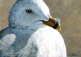 Ring-Billed Gull by Nambroth