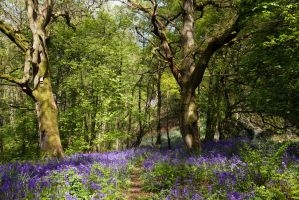 Bluebell Dell by parallel-pam