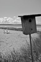 The Lake Birdhouse by jg244