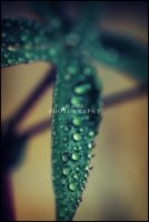 Raindrops and Bokeh by AniekPhotography