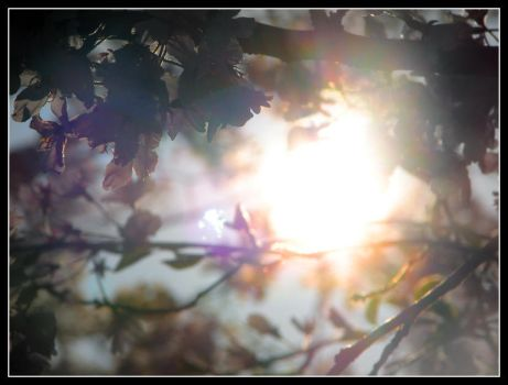 Cherry Blossoms 2 by Taeo