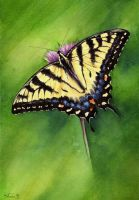 Swallowtail butterfly by Siluan