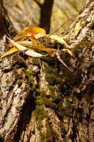 Leaves and Moss Trees by greenwalled1