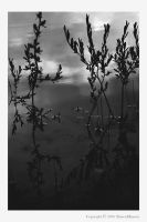 After the Rains III - bw by wroth