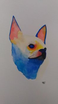 Chihuahua 2 by misselo83
