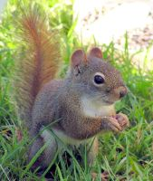Anxiety for Baby Squirrel by JocelyneR