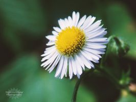 Simplicity by SuperGirlSwag