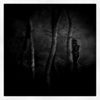 A Night In The Forest by intao